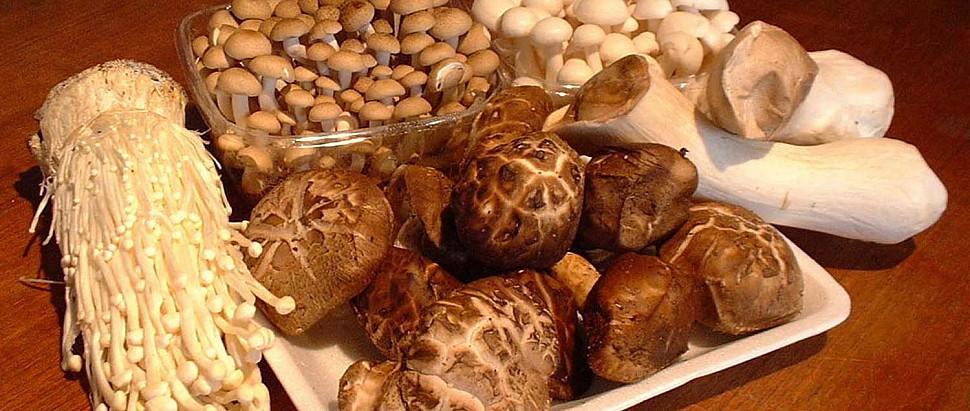 Мушрум Оптимайзер / Mushroom Optimizer, 90 капсул
